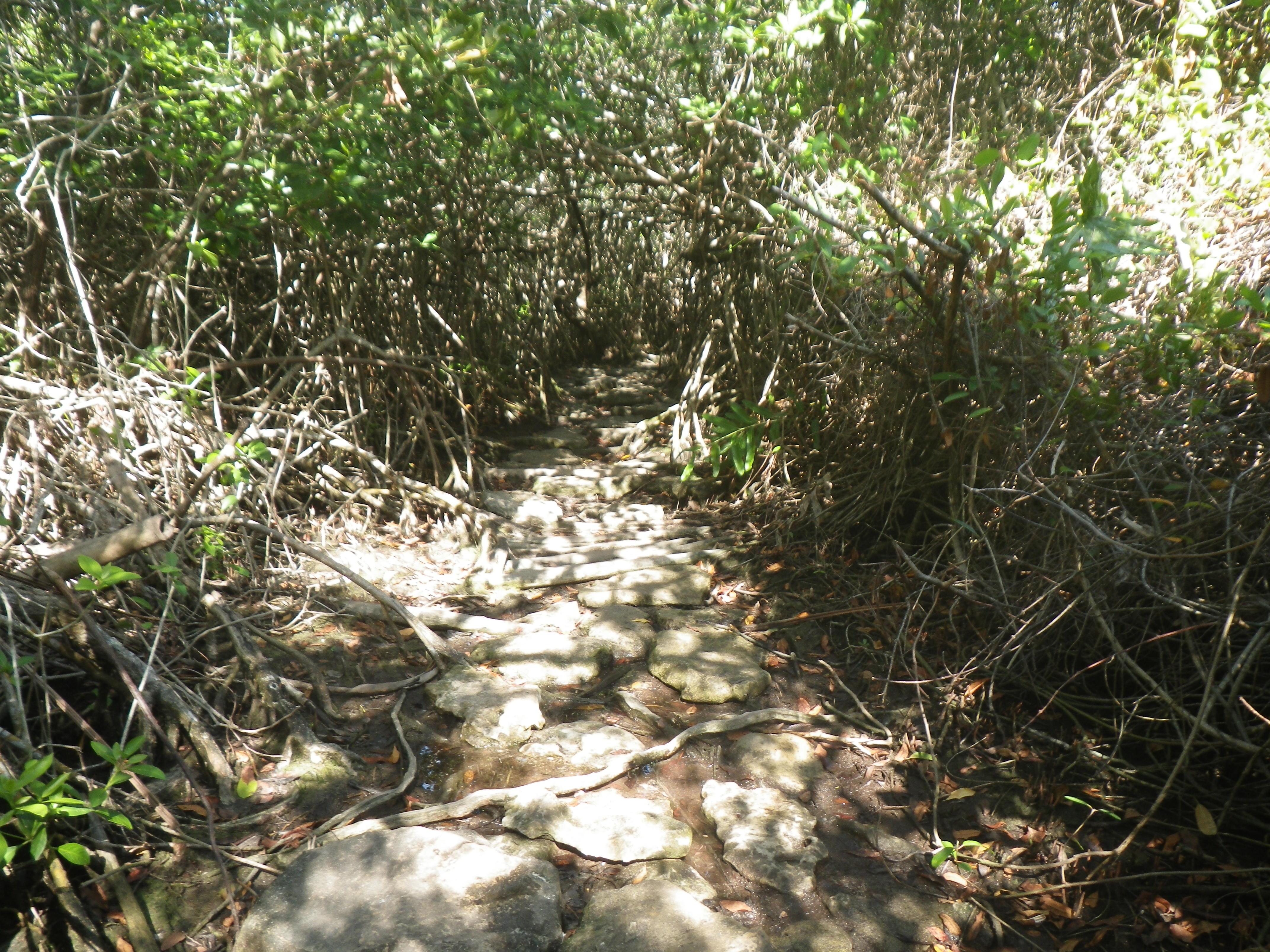 Jungle path to cenote